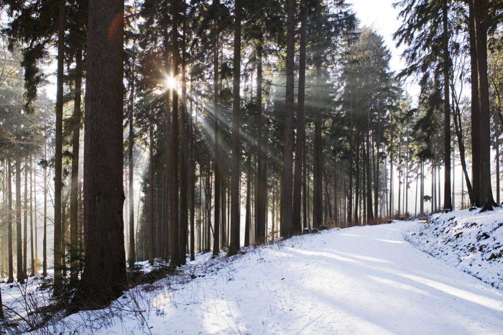 Schneehöhe Taunus